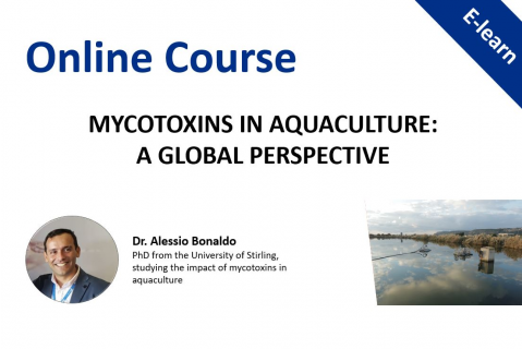 Mycotoxins in Aquaculture: A global perspective