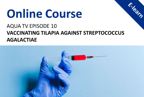 AquaTV Episode 10 - Vaccinating Tilapia Against Streptococcus Agalactiae