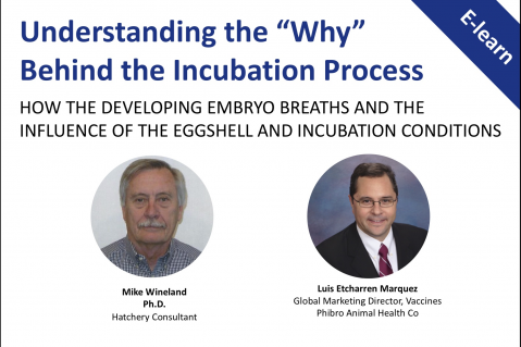 Understanding the 'Why' Behind the Incubation Process