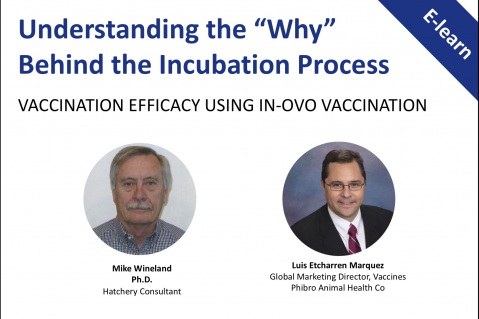 Understanding the Why: Vaccination Efficacy Using In-Ovo Vaccination