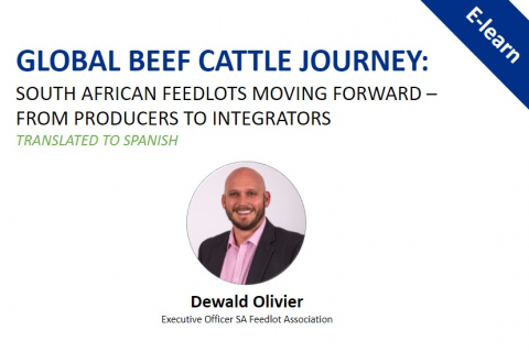 Global Beef Journey: South African Feedlots Moving Forward - Translated in Spanish