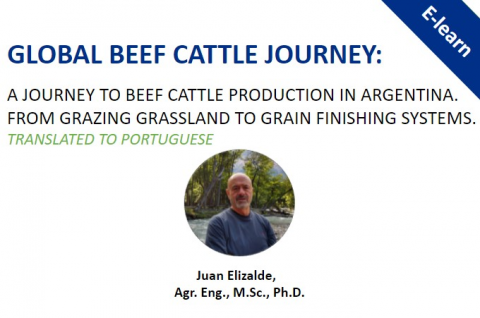 Global Beef Cattle Journey:  A Journey to meat production in Argentina - Portuguese