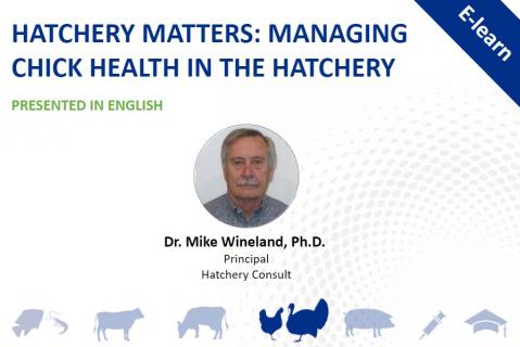 Hatchery Matters: Managing Chick Health in the Hatchery