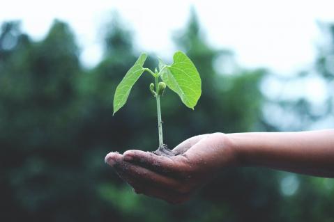 Reporte de Informação Não Financeira – Elaboração de Relatórios de Sustentabilidade