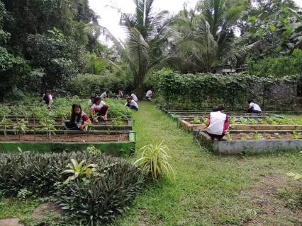 Plant Crops (AFF6102)