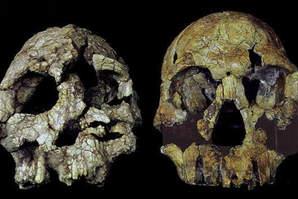 Human Evolution and Human Growth (BANT 508)