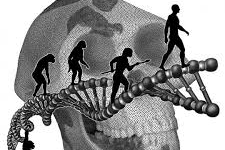 Introduction to Biological Anthropology (ANT-C-112)