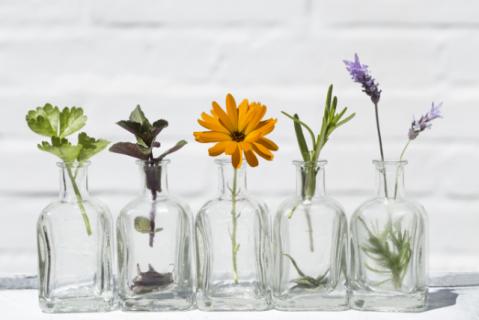 Aromatherapie Modul Grundwissen