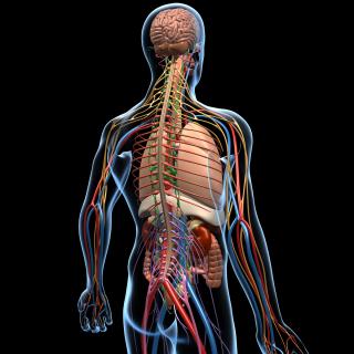 Human Anatomy (MT400)