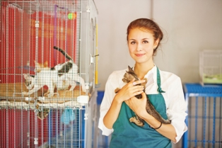 HR Management in Animal Welfare
