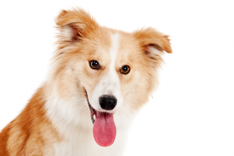 PFMA Dog Size-o-meter