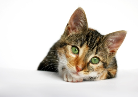 Article on the role of the Internet on Cat Rehoming