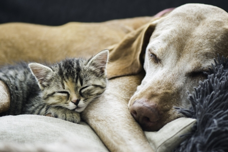 The Future of Dog and Cat Welfare