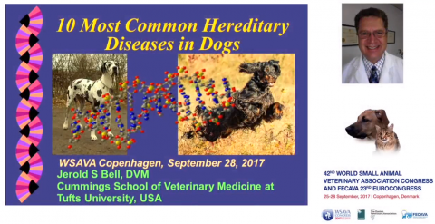 10 Most Common Hereditary Diseases in Dogs