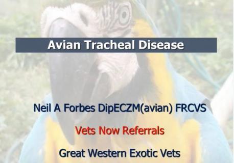 2014 Avian Tracheal Disease
