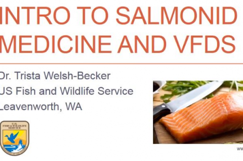 An introduction to salmonid medicine and the veterinary feed directive