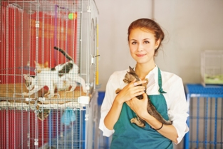 Feline chilled Managing stress in the cattery - Dr Maggie Roberts & Dr Vanessa Howie