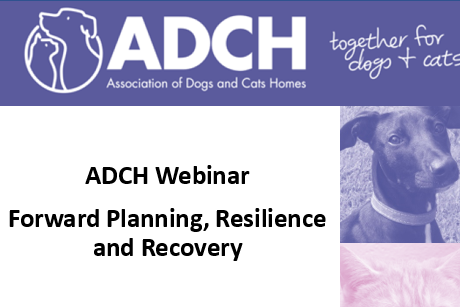 ADCH Webinar: Recovery & Resilience