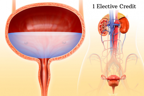 Urinary System: Kidney and Bladder